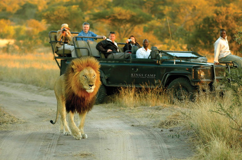 safari-drive-to-view-lions1