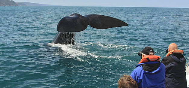 whale-watching-in-mossel-bay